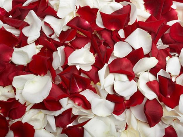 rosas-rojas-y-petalos-de-rosas-blancas_38-4193